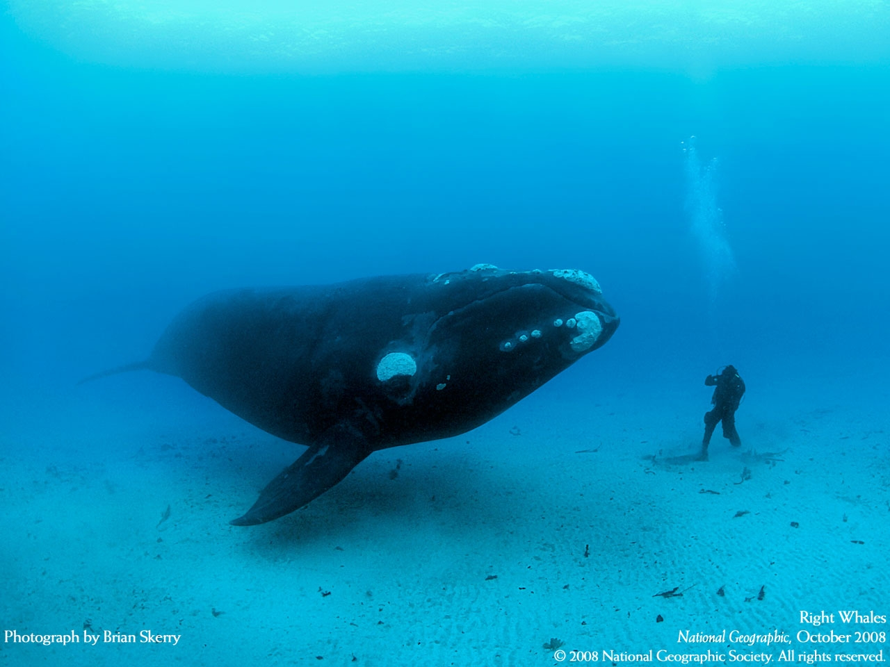 Diving With Whales, Nice n Funny