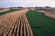 Strip Cropping is when you grow cultivated crops like cotton or corn