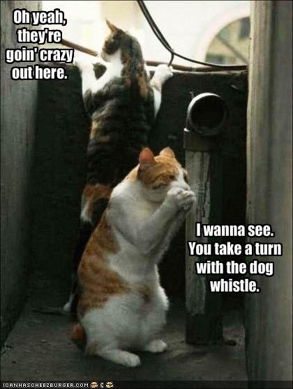 Funny Pictures Cats Tease Dogs With Dog Whistle