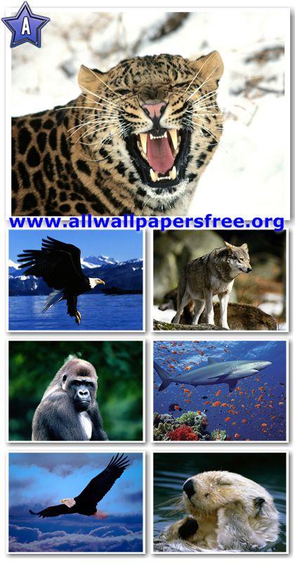 60 Amazing Animals Wallpapers 1280 X 1024 [Set 9]