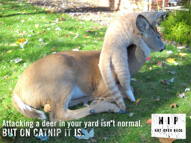 Funny catnip PSAs show what will happen if your cats use catnips, funny cats, funny cat pictures, cat pictures, funny psas, catnip psas