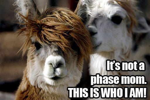 Image result for funny llama pictures