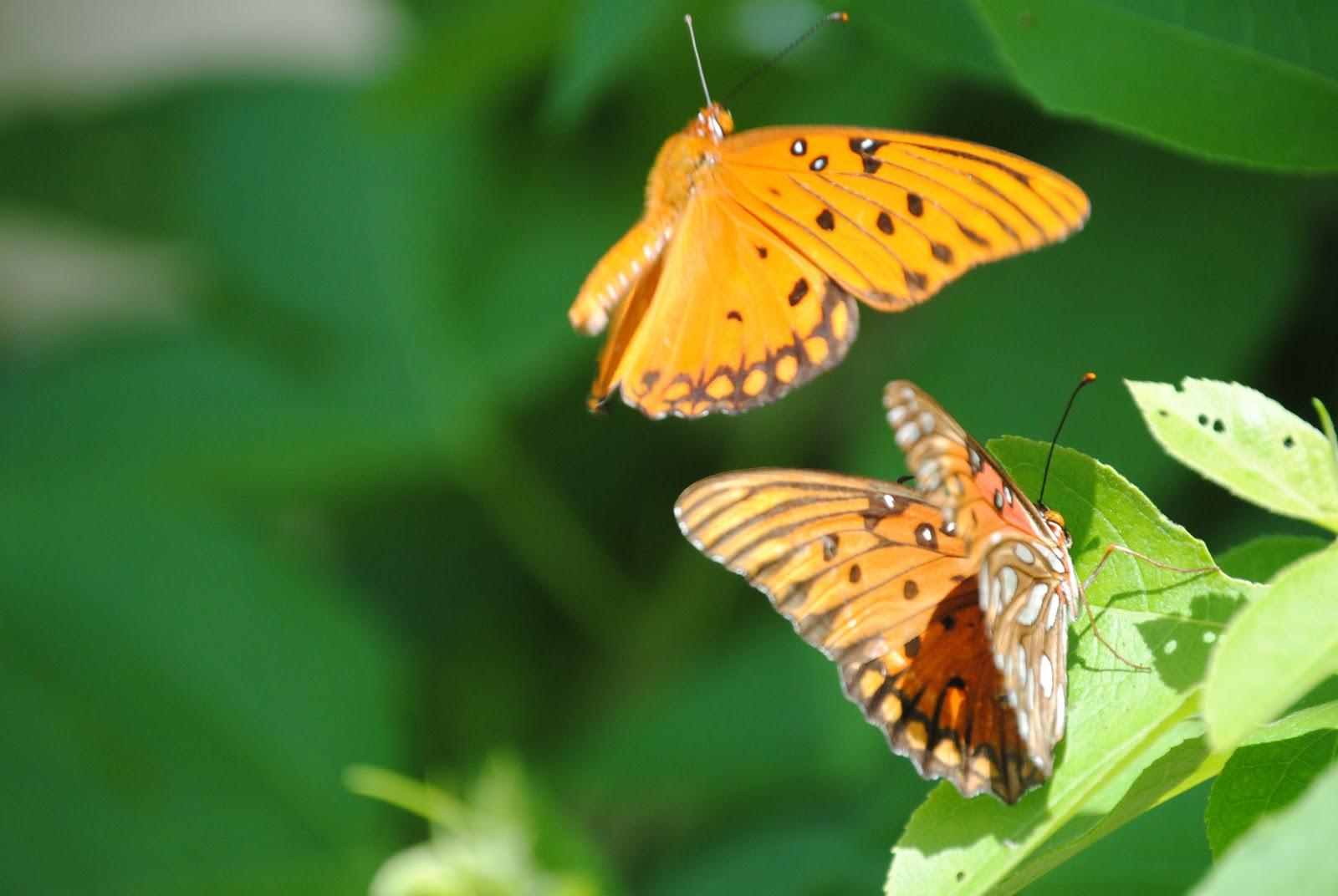 """ΣΧΟΛΗ ΓΟΝΕΩΝ Ι.Μ.ΚΥΘΗΡΩΝ Διακ. Παύλος Καλλίκας Θεολόγος """"Η συζυγία και το φαινόμενο της πεταλούδας"""""""