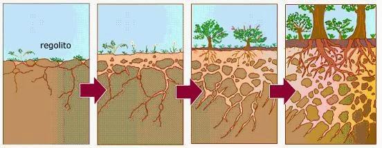 Huerta sostenible enero 2014 for Como se forma y desarrolla el suelo