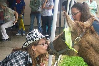 Funny Donkey Kissing