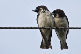 Two birds sitting on a power line