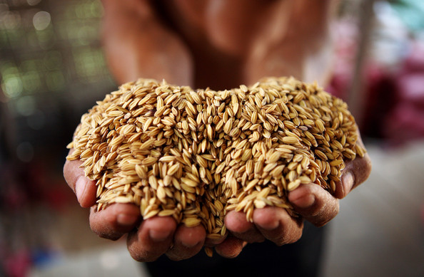 farmers group raps nf head on rice import move В спортния всекидневник тема:спорт можете да прочете всичко за български и международен.