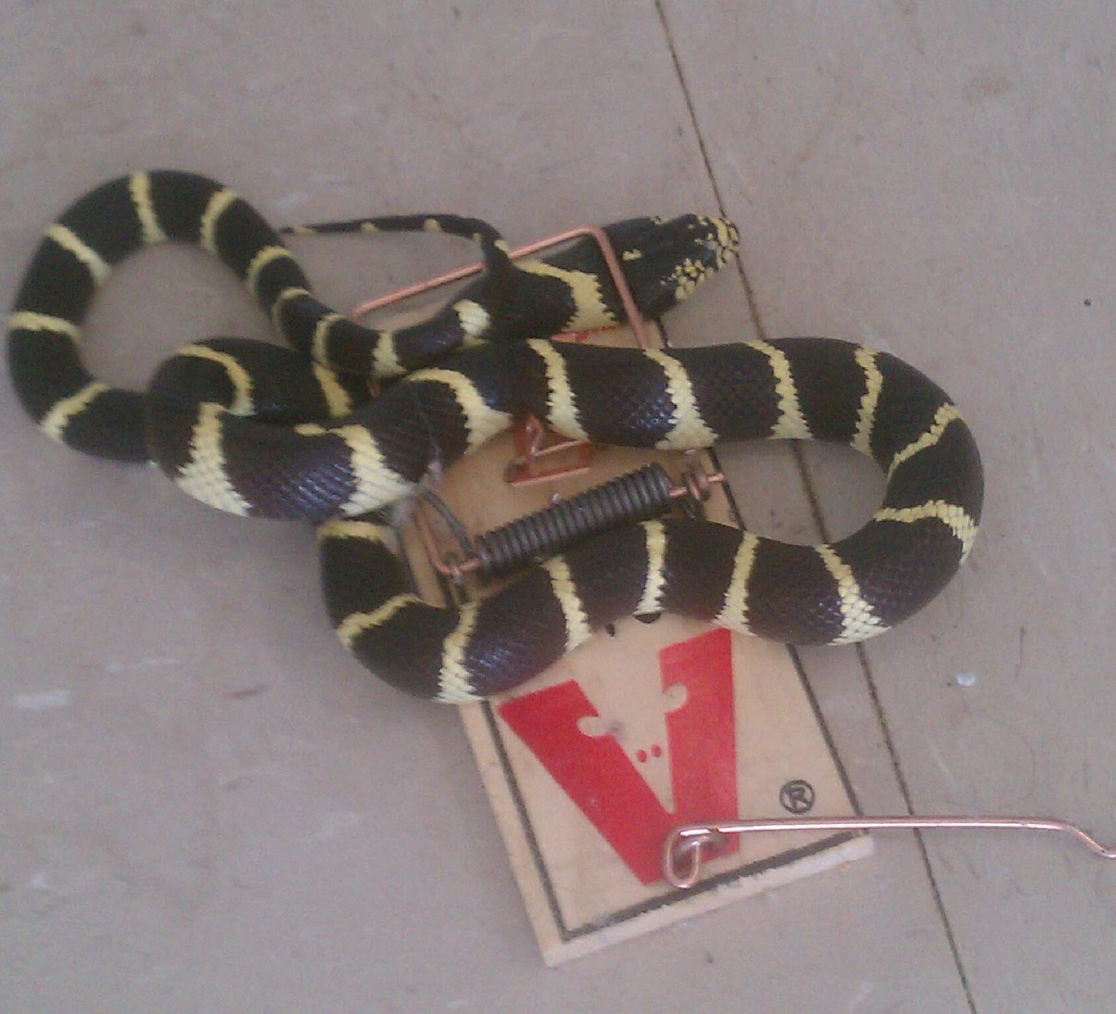 Winemaker s journal how do you release a live snake from a mousetrap