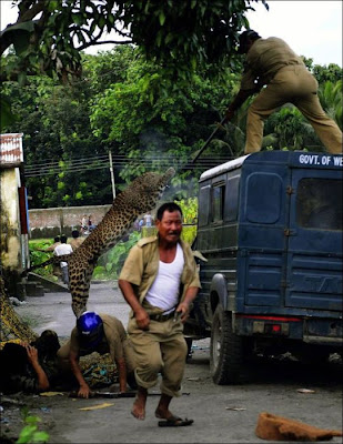 Leopard Attacks Villagers in India Seen On www.coolpicturegallery.us