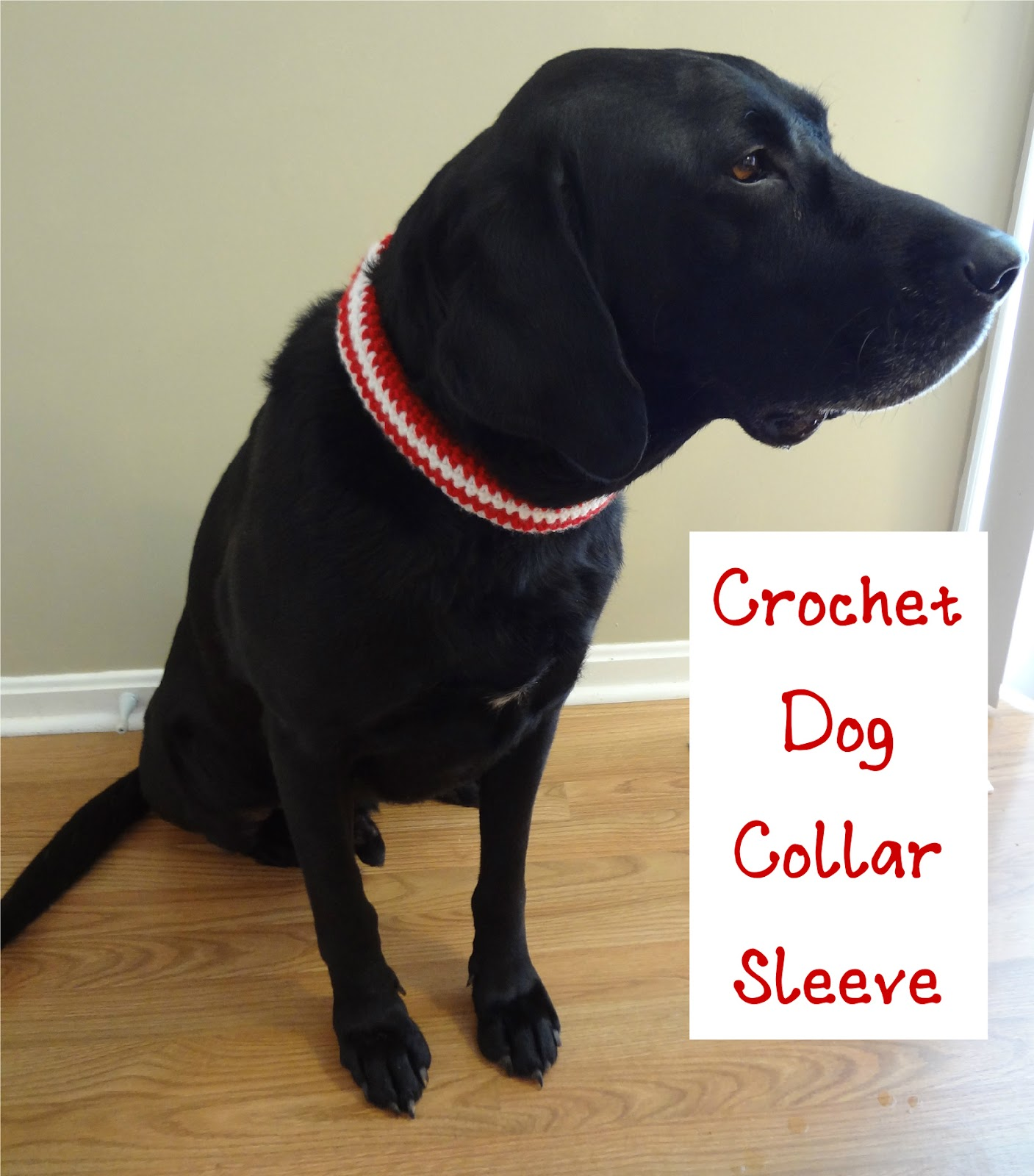 Free Crochet Pattern For Dog Harness : Fiber Flux: Free Crochet Pattern...Crochet Pet Collar Sleeve!
