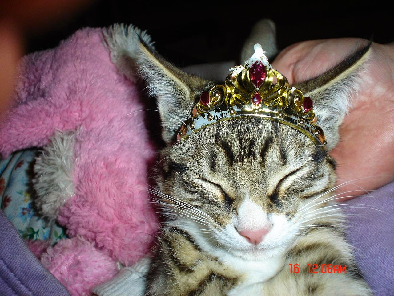 My kitty with a crown- Just Because :)