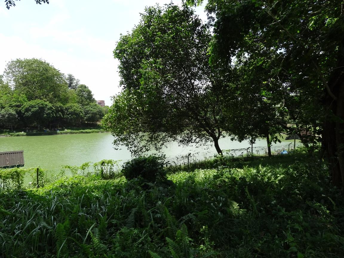 Tasik bayu freshwater fishing pond fishing spots in johor for Freshwater pond fish