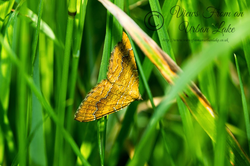 Yellow Shell - Loughton Valley Park, Milton Keynes