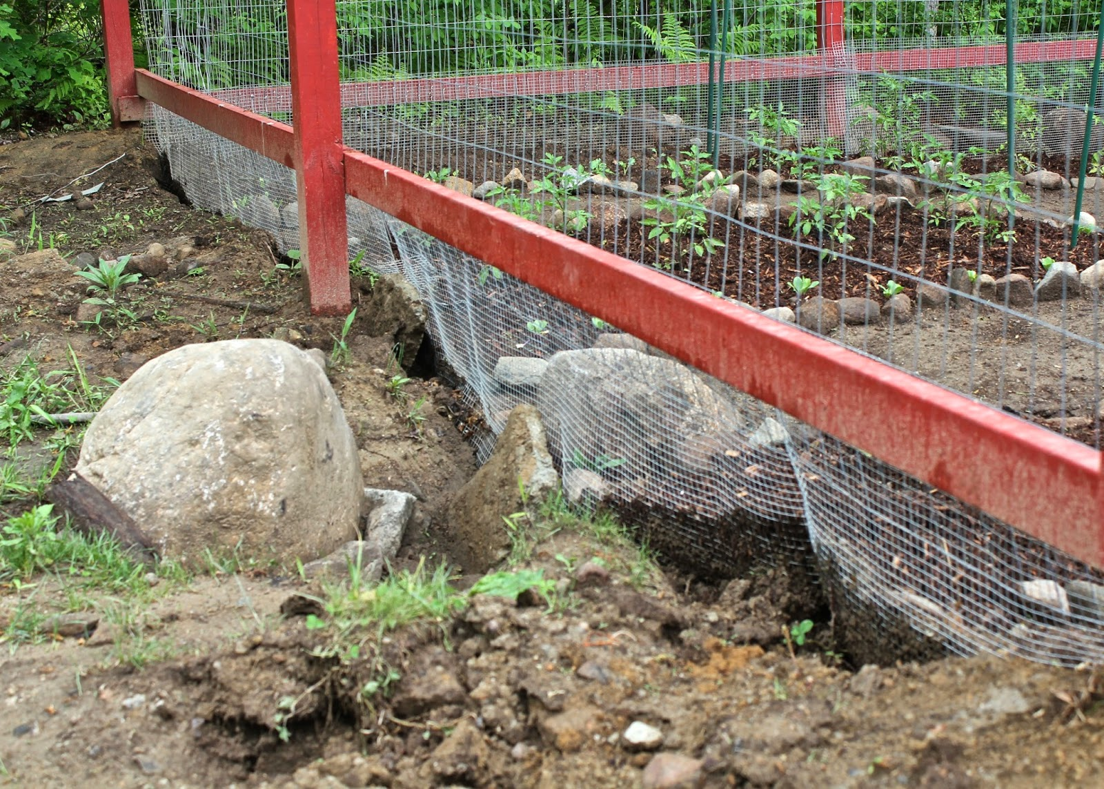 Red House Garden Our New Red Veggie Garden