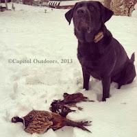 Hunting Pheasant Illinois