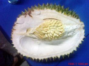 Durian dalam durian di Kuantan