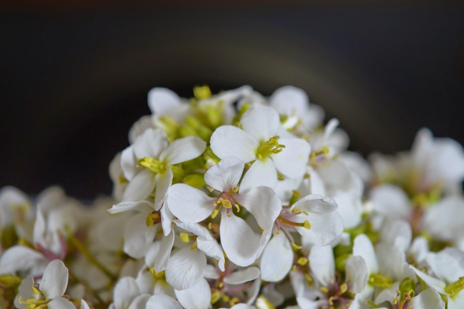 Flores blancas Olaimar