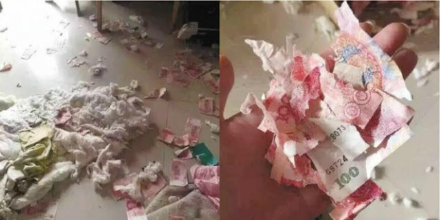 Maksud Mau Sembunyikan Uang dari Istri, Malah Hancur Dimakan Anjing