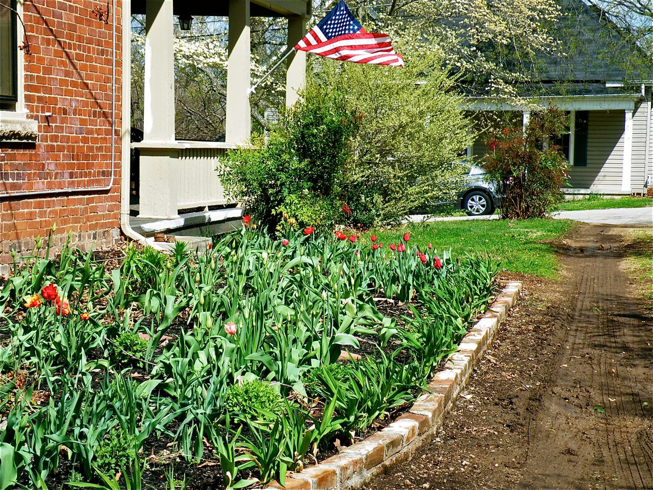 "Man s tulips pretty all tucked inside their new brick ""home"