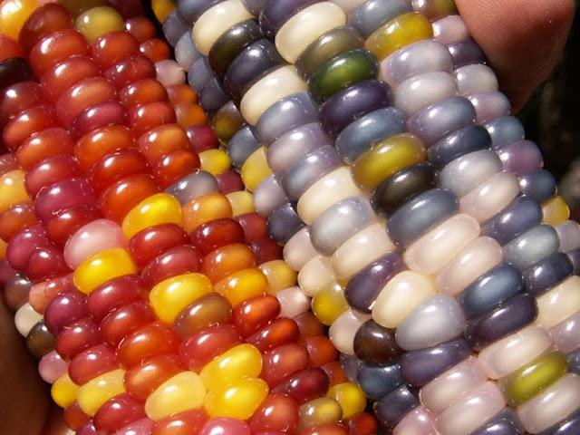maíz de gemas de cristal