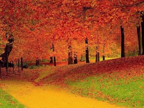 Стихи последние листья срывая с ветвей