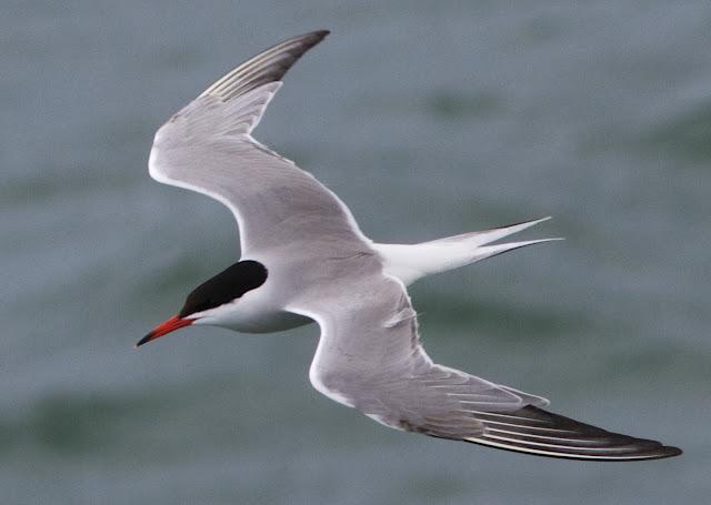 Birding, Photography