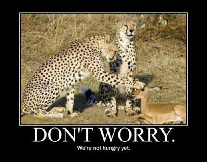 Don't Worry - We're Not Hungry Yet!