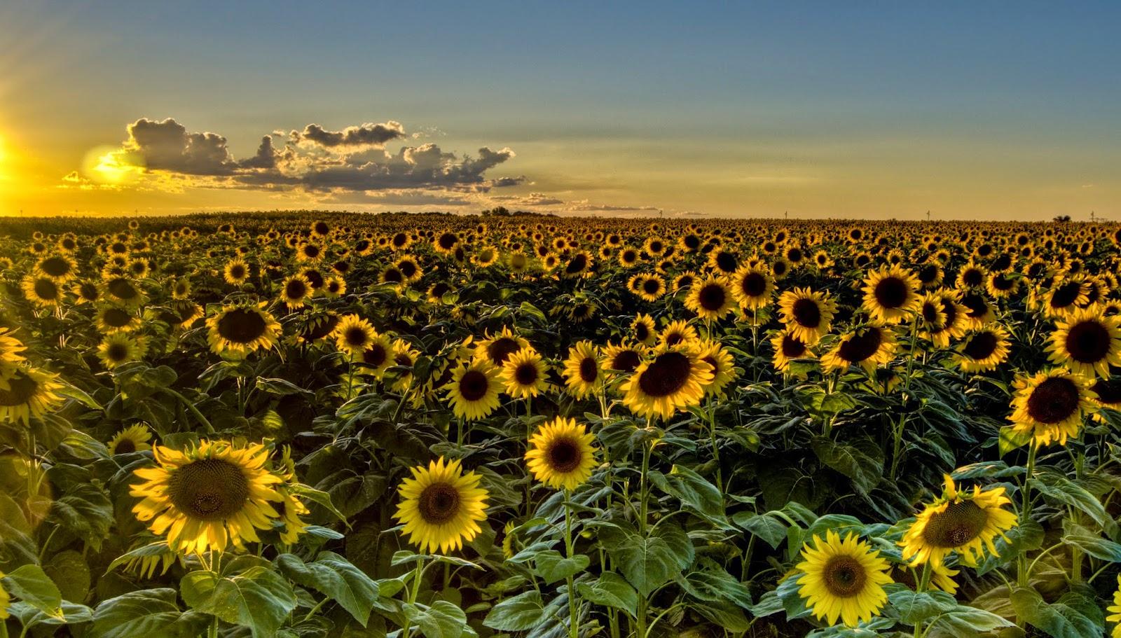Voc se importa com as flores paisagens deslumbrantes for Pagina de wallpapers hd