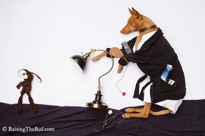 dog recreates movie scenes The Jerk ashtray remote control lamp paddle ball