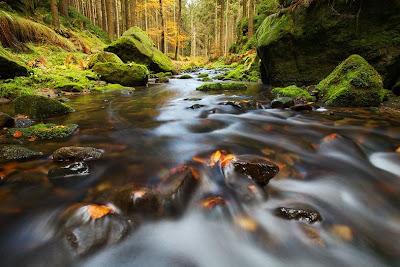 Rio que atraviesa el bosque