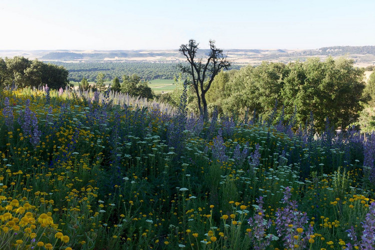 Spanish wildflower garden jard n de tom stuart smith en for Jardin spanish