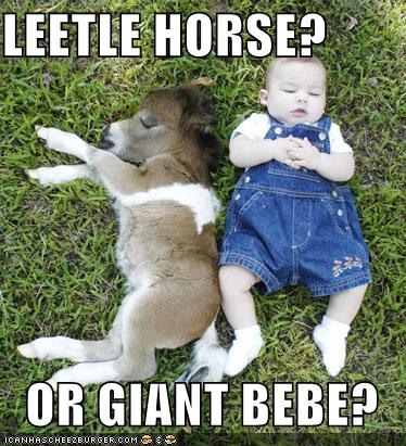Animal Funny Pictures on Funny Animals  Funny Horse Pictures Images