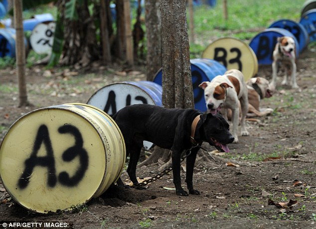 legalize love pitbulls and their brutal