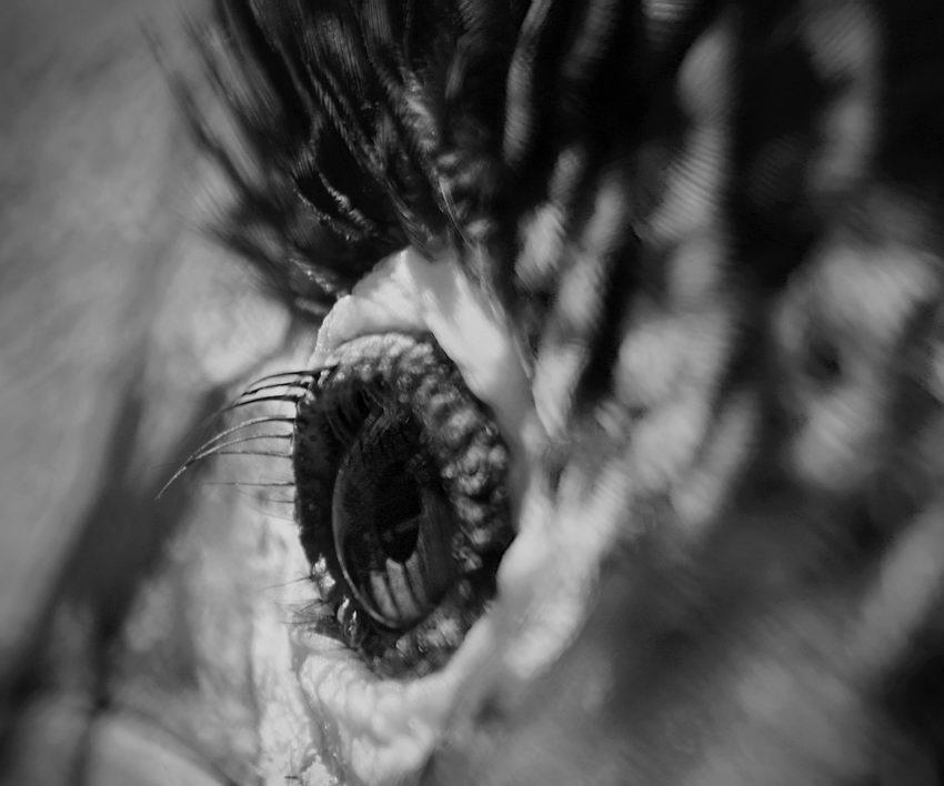 Olho de uma ave focado de muito perto de forma a desfocar toda a zona envolvente