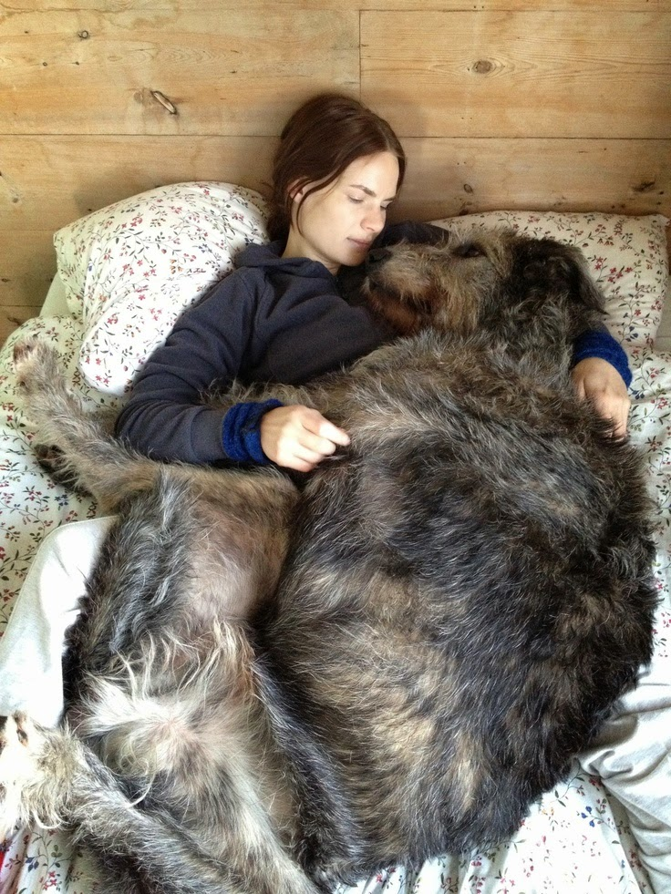 See more Irish Wolfhound. The ultimate big dog. http://cutepuppyanddog.blogspot.com/