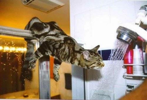 حقائق ومعلومات مثيرة للإهتمام حول القطط!