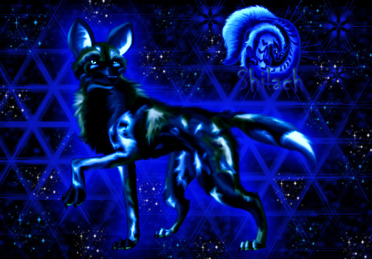 SOMNUS: El Perro como totem