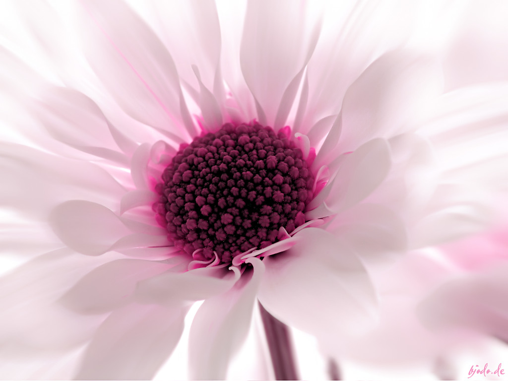 wallpaper pink flowered flower - photo #1
