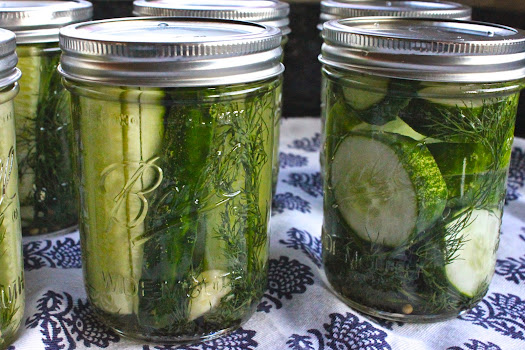 ... Which Things Grow: Chew on This | Refrigerator Garlic Dill Pickles