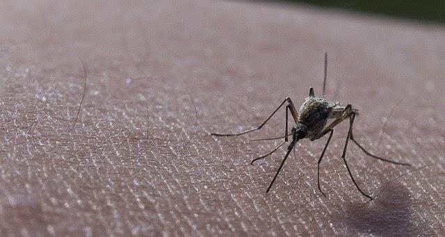 Harapan untuk hapuskan masalah Malaria