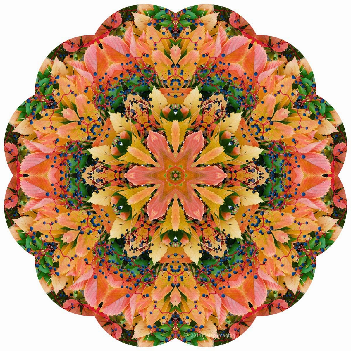 Kaleidoscope Photo Art fall by Jeanne Selep