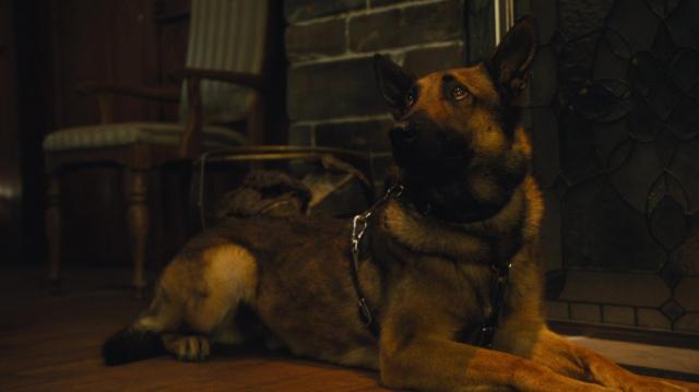 Hình ảnh phim Chú Chó Max 2: Người Hùng Nhà Trắng