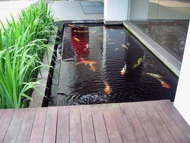 kolam-ikan-minimalis.jpg