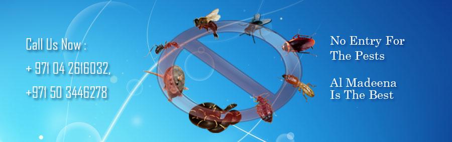 Al Madeena Pest Control Services