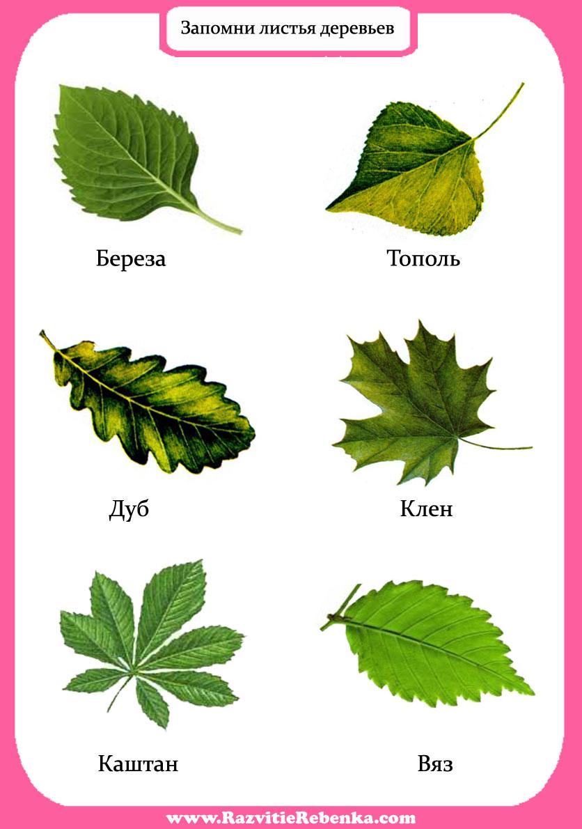 Как сделать листья клен