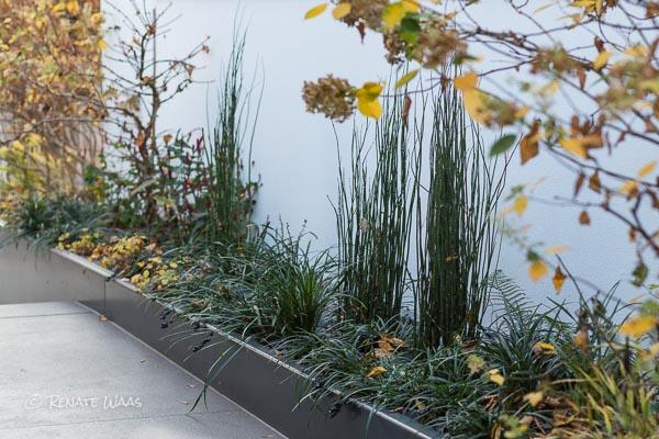 Gartenblog geniesser garten schoene staudenbeete im herbst for Moderner garten pflanzen