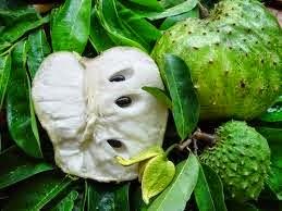 Le corossol ou le fruit de l'arbre graviola