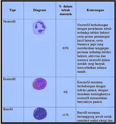 Neutropenia , Agranulositosis , Kekurangan Sel Darah Putih