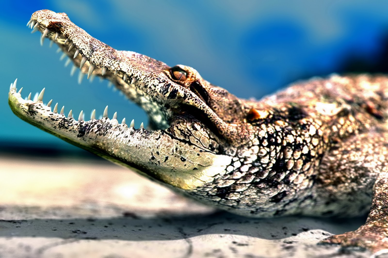 alligator wallpaper for home - photo #42