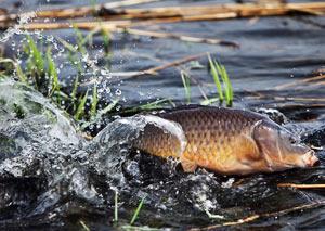 Рыбалка сазана